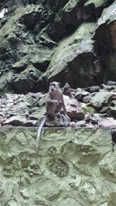 バトゥ洞窟 サル