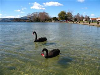 新宿 黒鳥の湖 女の子接待