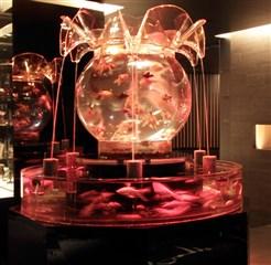 仙台キャバクラ金魚鉢